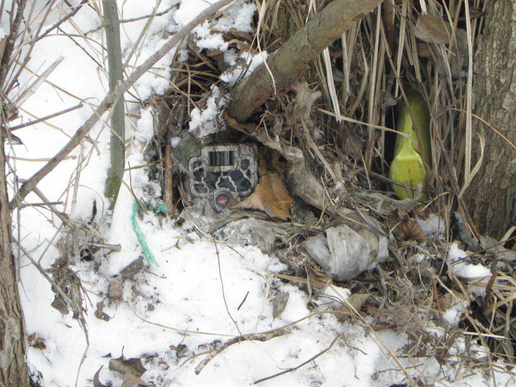 Read more about the article Video: camerele ascunse ne dezvăluie fauna râurilor din România