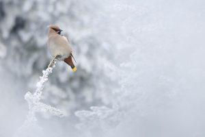 1 Grand Prize _ Nagy Zoltan Gergely_Romania_Winter visitor