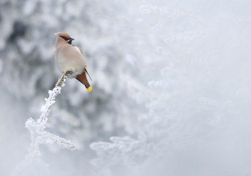 """Câștigătorii celui de-al cincilea concurs internațional de fotografie de natură """"Milvus"""""""