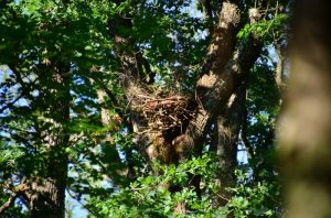 Artificial nest