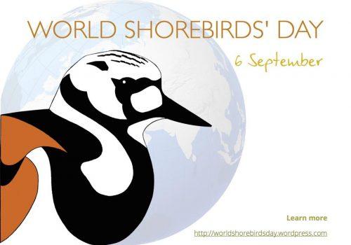 Ziua mondială a păsărilor de țărm
