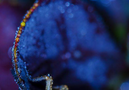 """Expoziție foto: Al șaselea Concurs Internațional de Fotografie de Natură """"Milvus"""""""