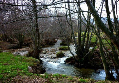 """Asociația pentru Protecția Păsărilor și a Naturii """"Grupul Milvus"""" se alătură Coaliției Natura 2000 și WWF România și condamnă lucrările de pe râul Alb din munții Retezat"""