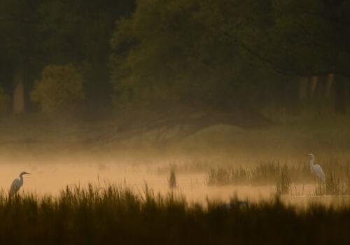 """Câștigătorii celui de-al șaptelea Concurs Internațional de Fotografie de Natură """"Milvus"""""""