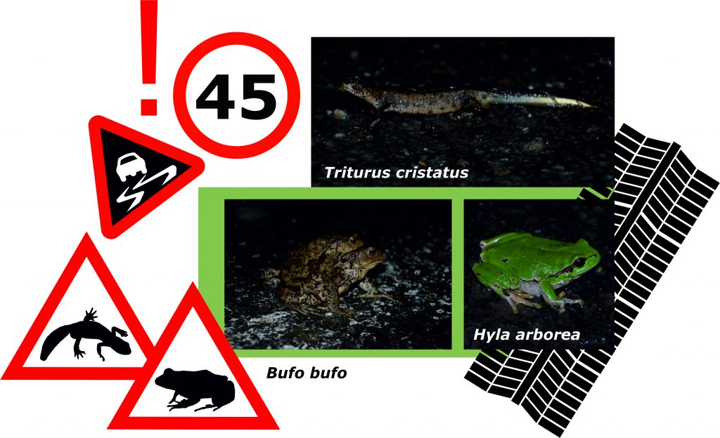 Read more about the article Attention: migrating amphibians! Place warning signs on the roads!