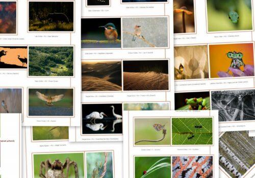 Peisaje și animale sălbatice – perioada de înscriere: 13 august!