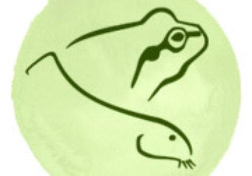 Vipera de fâneață: o nouă populație descoperită!