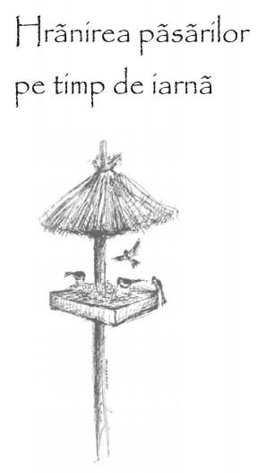 Read more about the article Hrănirea păsărilor pe timp de iarnă