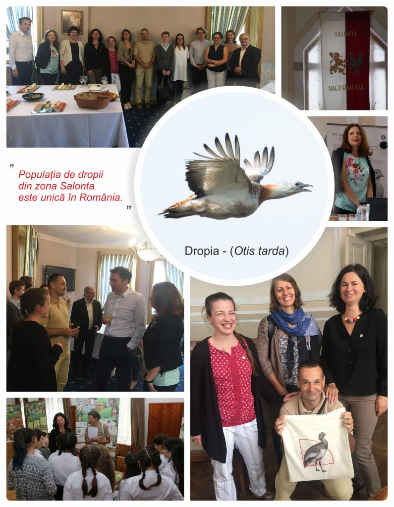 Read more about the article Dropia, în prag de conservare