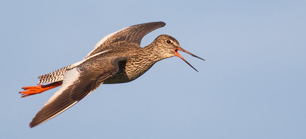 Al V-lea Maraton Ornitologic