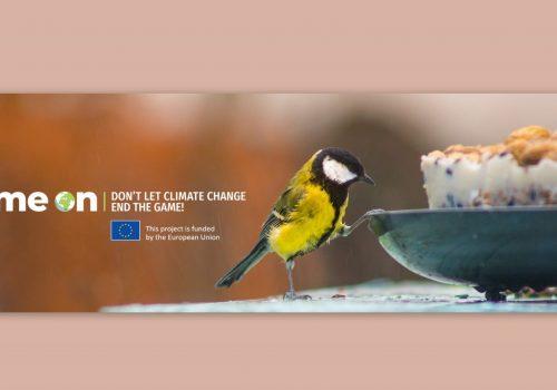 Rezultatul studiului hrănirii păsărilor