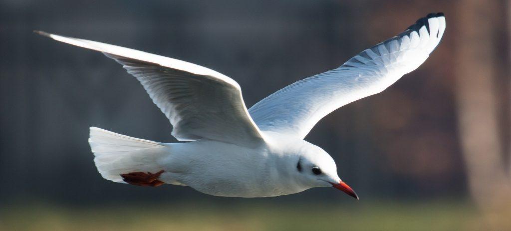 Read more about the article Sumarul recensământului Internațional al Păsărilor de Apă din 2020