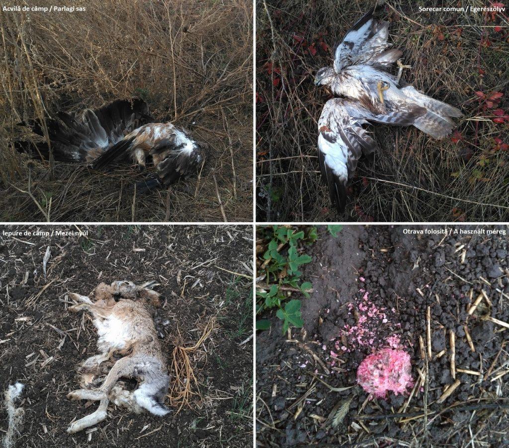 Read more about the article Poliția arădeană investighează cazul păsărilor otrăvite