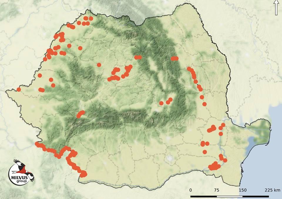 Read more about the article Recensământul de Iarnă al Păsărilor de Apă – 2019