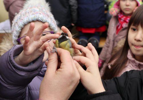 Păsări și copii