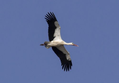 The storks are coming – COMPETITION!