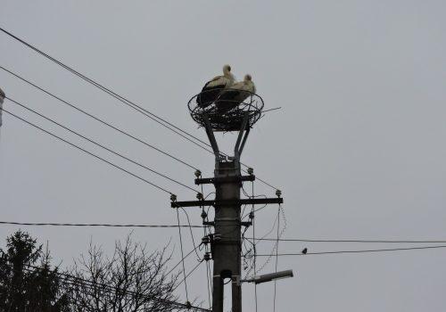 Újabb gólya lakhelyek