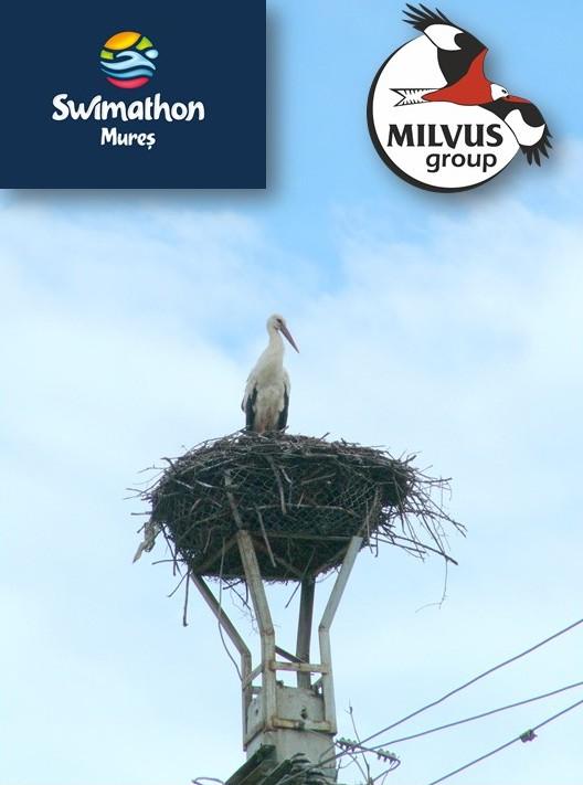 Să salvăm berzele din jurul nostru – Milvus la Swimathon 2019