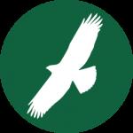 A fészeknél: szirti sasok monitoringja