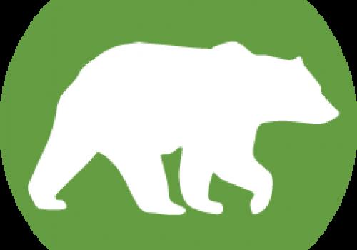 Factual despre urs – episodul 2: Puii de urs