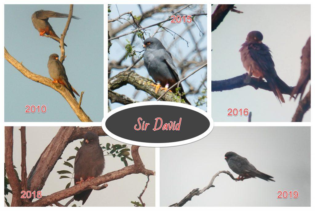 Read more about the article În onoarea Dvs., Sir David!