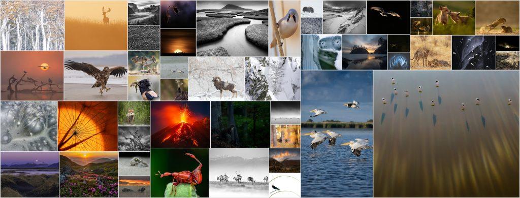 """Read more about the article Rezultatele celui de-al XI-lea Concurs Internațional de Fotografie de Natură """"Milvus"""""""