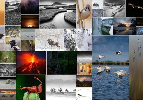 """Rezultatele celui de-al XI-lea Concurs Internațional de Fotografie de Natură """"Milvus"""""""
