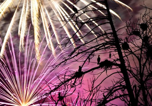 Petarde, artificii și păsări