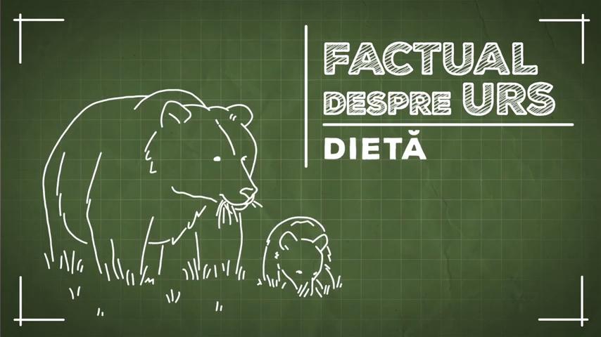 Factual despre urs – episodul 5: Dietă