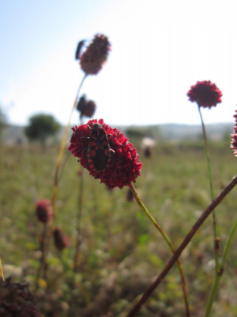 Read more about the article Orhidee și plante de sărături, bogății naturale de pe malurile Mureșului