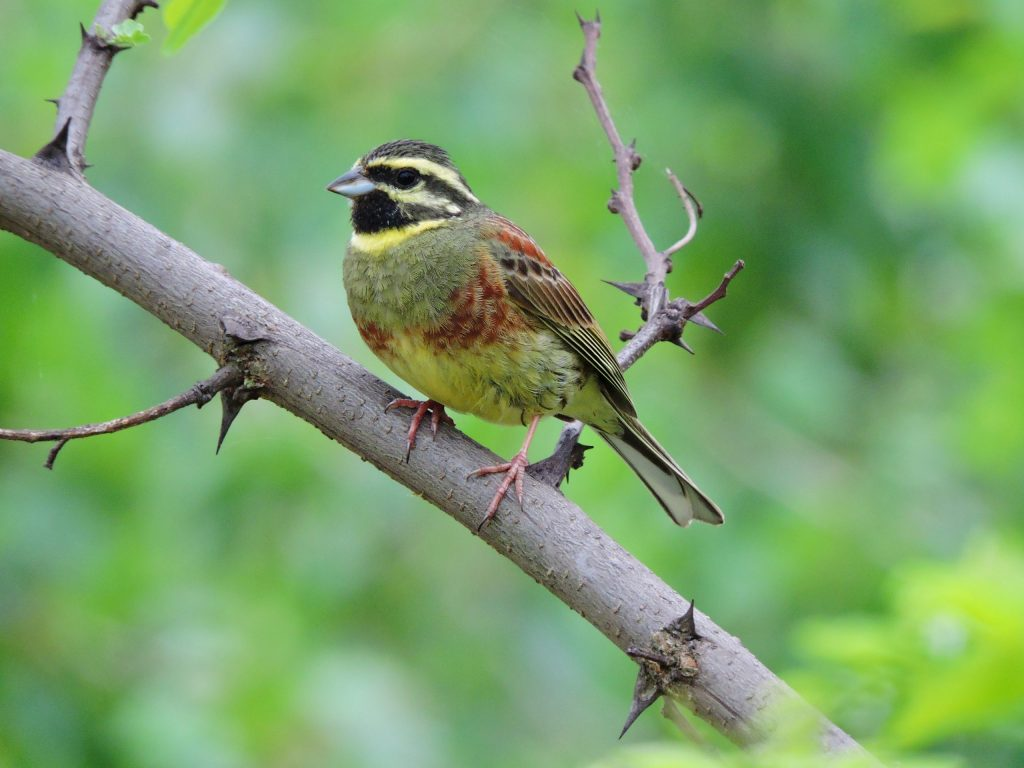 Read more about the article Păsările în mijlocul schimbărilor climatice