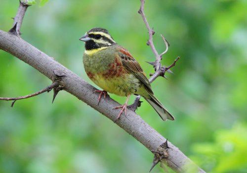 Păsările în mijlocul schimbărilor climatice