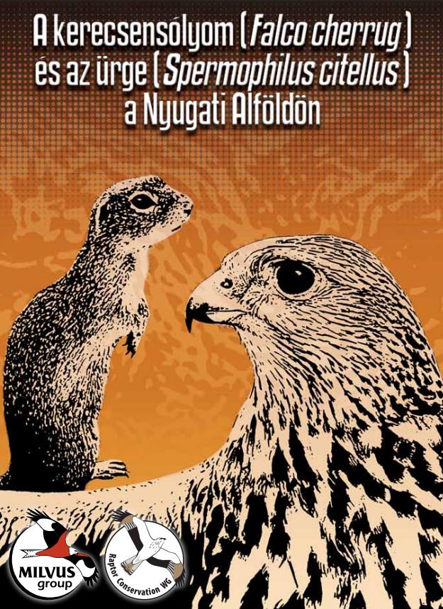 Read more about the article A kerecsensólyom (<em>Falco cherrug</em>) és az ürge  (<em>Citellus citellus</em>) a Nyugati Alföldön