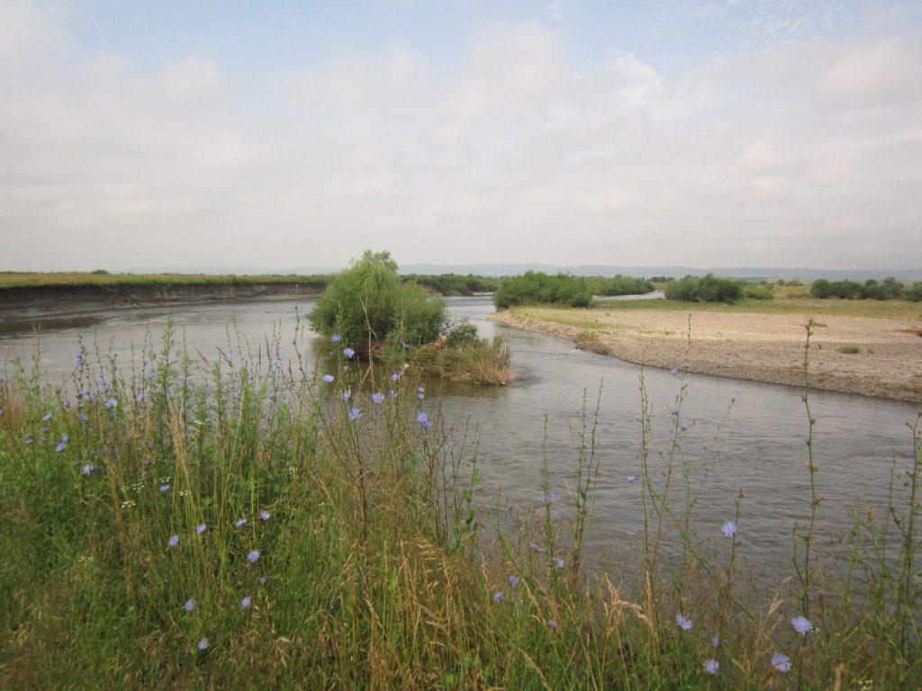 Read more about the article Situl Natura 2000: Râul Mureș între Iernuțeni și Periș