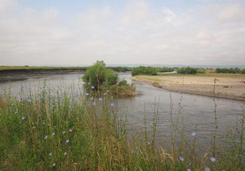 Situl Natura 2000: Râul Mureș între Iernuțeni și Periș
