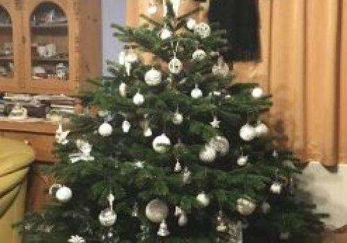Karácsonyi dilemma. Igazit vagy műfenyőt hozzon az angyal?