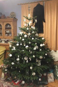 Read more about the article Karácsonyi dilemma. Igazit vagy műfenyőt hozzon az angyal?