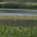 A Maglavit Különleges Madárvédelmi Terület (ROSPA0074) madárvédelmi területen költő és átvonuló madárfajokat diverzitása