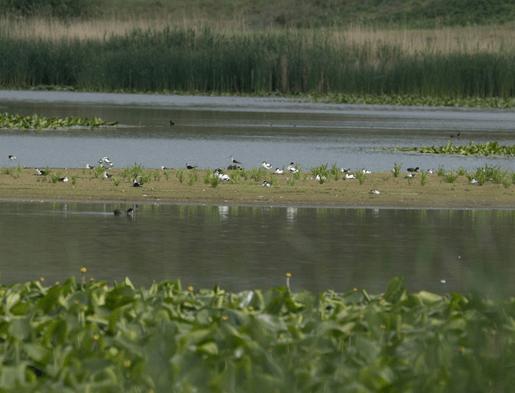 Read more about the article A Maglavit Különleges Madárvédelmi Terület (ROSPA0074) madárvédelmi területen költő és átvonuló madárfajokat diverzitása