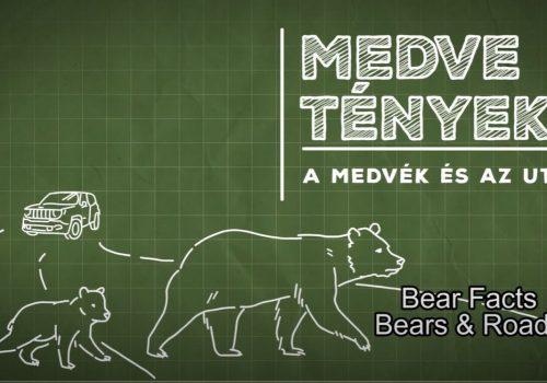 Medve tények 8: Tévhitek