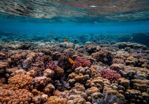 O tehnologie câștigătoare a Premiului Nobel poate ajuta coralii să supraviețuiască în oceanele din ce în ce mai calde