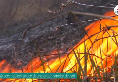 Consecințele incendierilor de miriști și pajiști