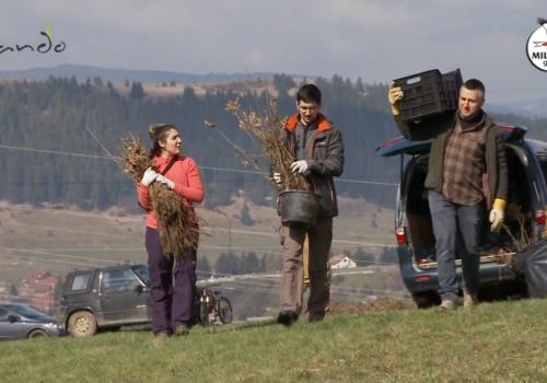 Cum să plantăm arbori! Un ghid – episodul 1