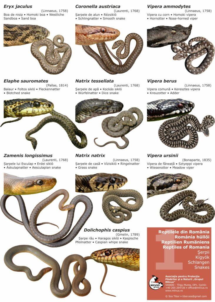 Read more about the article Miért gyilkoljuk továbbra is a kígyókat?
