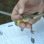 Inelare de păsări
