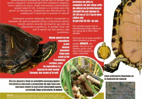 Țestoase exotice în natură