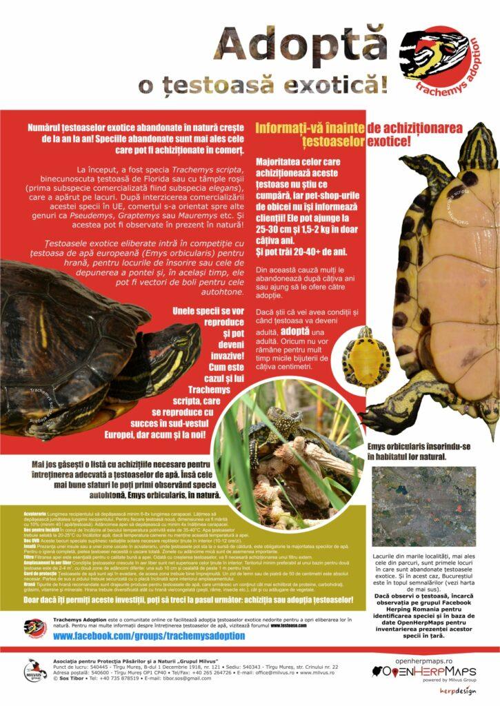 Read more about the article Țestoase exotice în natură